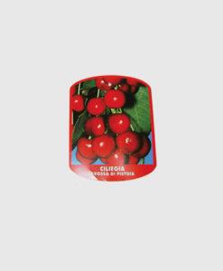 Οργάνωση Φυτωρίου | Ετικέτα για φρούτα